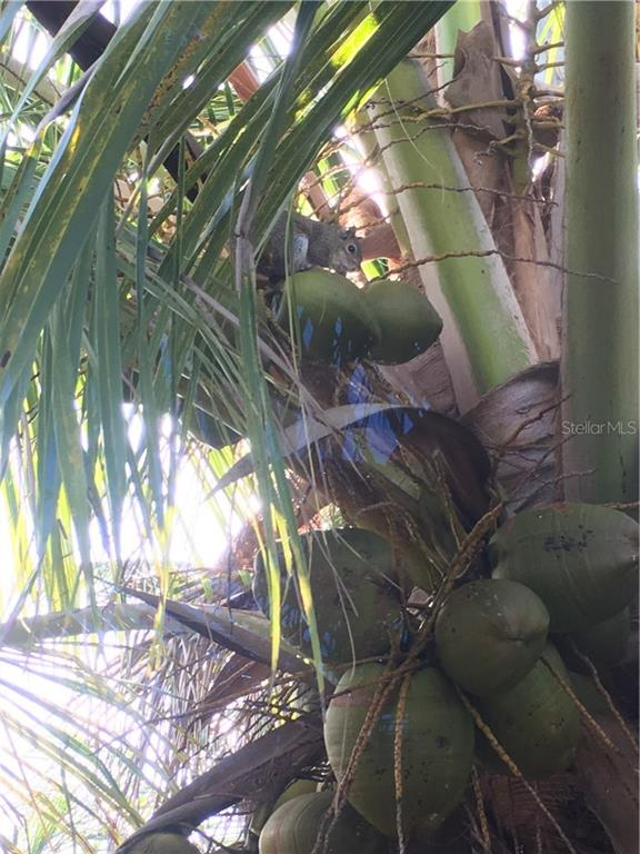 Squirrel in a coconut tree - Vacant Land for sale at 8232 Little Gasparilla Is, Placida, FL 33946 - MLS Number is D5917030