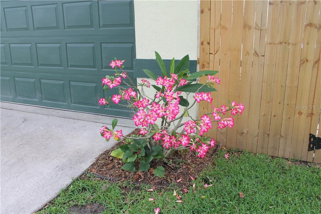 Vibrant mature landscaping all around the home. - Single Family Home for sale at 4803 Glenbrooke Dr, Sarasota, FL 34243 - MLS Number is A4435920