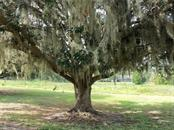 Mature Tree in yard - Single Family Home for sale at 13511 3rd Ave E, Bradenton, FL 34212 - MLS Number is A4187462