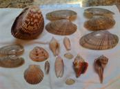 A good morning's shelling on the beach. Treasures! - Condo for sale at 439 Beach Rd #e, Sarasota, FL 34242 - MLS Number is A4192797